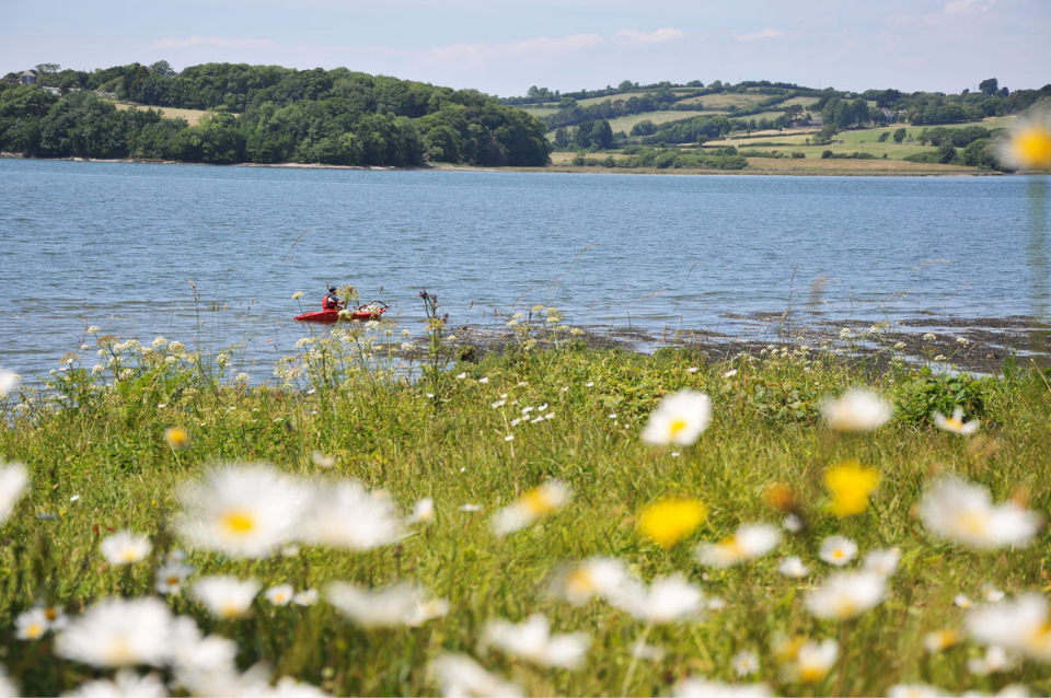 Summer on the Estuary